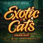 Exotic Cats online slot oyunu